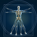 Applied Kinesiology Muscle Testing in Scottsdale